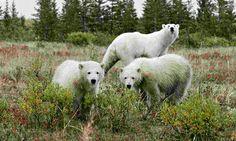 IPCC report: climate impacts on wildlife