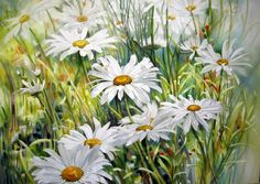 Paintings - Marney Ward SFCA, SCA, Artist - many flower paintings on site
