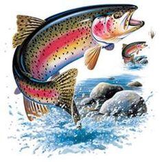 Rainbow Trout HEAT PRESS TRANSFER for T Shirt Tote Sweatshirt Quilt Fabric #249e #AB