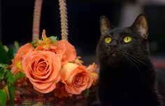 Black Cat, Roses hd wallpaper by lise Cat Run, Rose Wallpaper, Cat Sleeping, Computer Wallpaper, Pugs, Flowers, Black, Roses, Black People