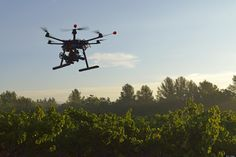 Drone´s flying above Vineard!