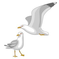 Flying and Walking Seagulls vector art illustration