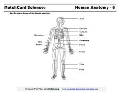 15 Best Teaching Body Systems Images Teaching Science Science