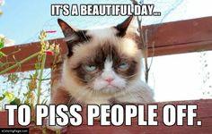 funny cat pictures grumpy cat