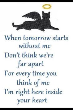 Here is Pet Sympathy Quote Ideas for you. Pet Sympathy Quote sympathy cards for pets a loyal companion and best friend. Pet Quotes Cat, Pet Poems, Animal Quotes, Cat Loss Quotes, Dog Death Quotes, Animal Poems, Pet Sympathy Quotes, Pet Loss Poems, Sympathy Cards