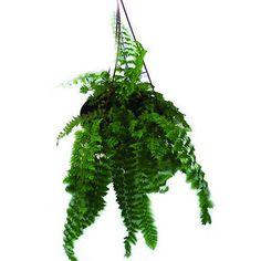 E claro, você não pode deixar de ter plantas em uma decoração tropical.   20 itens de decoração para quem ama ser tropical
