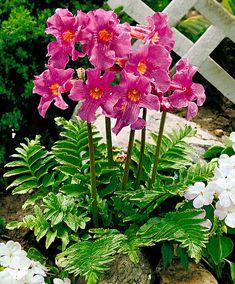 Fleurs et Plantes | Bakker.com Bulbes à fleurs à découvrir