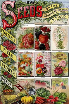 SEEDS-38 Catalogs Covers Collection with 96 vintage images USA flag frame in High resolution old digital download printable vegetables           data-share-from=listing        >           <span class=etsy-icon