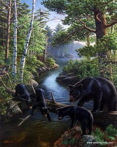 In the James Meger print BEAR PAUSE, nature has created a log bridge from which three Black bear cubs are trying to fish. Mama bear stays close to supervise. Although black bears feed primarily on pla