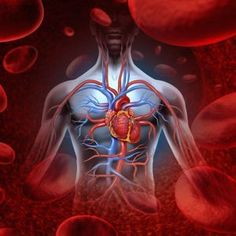 Breakthrough In Cardiovascular Health: Paraoxonase, Antioxidants & Genetics - Metabolic Healing