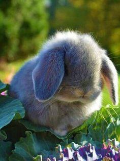 Taking Care Of Rabbits Funny Bunnies, Baby Bunnies, Cute Bunny, Rabbit Pictures, Cute Pictures, Lana Banana, Beautiful Creatures, Animals Beautiful, Animals And Pets