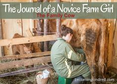 The Family Milk Cow — Becoming Kindred. Wasn't sure where to put this, but I wanted to hang onto this article in case we ever get a cow.