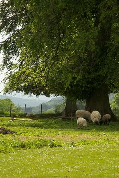 Sheep Pasture Scotland by mljart on Etsy Country Farm, Country Life, Country Living, Pasto Natural, Beautiful World, Beautiful Places, Landscape Photography, Nature Photography, Summer Scenes