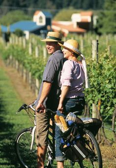 Rental Info and Reservations - Napa Valley, CA - Bike Rentals, New Bicycles and Accessories - Calistoga Bikeshop