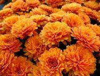 'Sunset Orange'