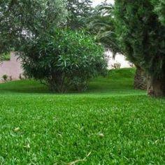 Pose de gazon synth tique pelouse artificielle trylawn for Temps de germination gazon