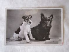 Two handsome terriers here. Wire Haired Terrier, Wire Fox Terrier, Terrier Mix, Terrier Dogs, Fox Terriers, Cute Puppies, Cute Dogs, Clever Dog, Vintage Dog