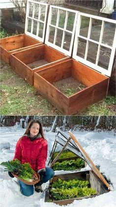 Get inspired ideas for your greenhouse. Build a cold-frame greenhouse. A cold-frame greenhouse is small but effective. Greenhouse Plans, Greenhouse Gardening, Container Gardening, Greenhouse Wedding, Diy Small Greenhouse, Winter Greenhouse, Outdoor Greenhouse, Greenhouse Fabrics, Cheap Greenhouse