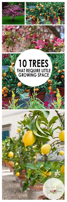 Growing Trees Tree Growing Tips and Tricks Trees for Small Spaces Small Space Landscaping Tips Landscaping Hacks for Small Yards Trees for Little Yards How to Grow Trees Popular Pin Landscaping Trees, Front Yard Landscaping, Patio Trees, Gardening For Beginners, Gardening Tips, Flower Gardening, Drought Tolerant Trees, Fringe Tree, Myrtle Tree