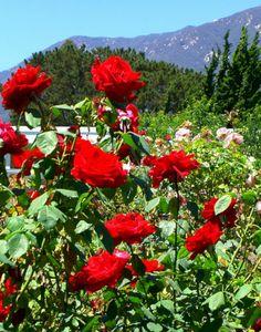 Inspiring 45+ Awesome Garden Rose Flower Ideas For Amazing Garden https://decoredo.com/8456-45-awesome-garden-rose-flower-ideas-for-amazing-garden/