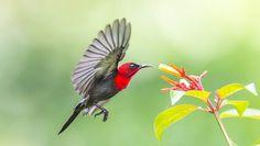 Spot on Bird ! by yeomt20031, via 500px