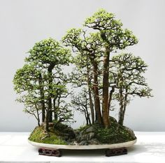 The Art of Bonsai Project - Feature Gallery: The Penjing of Qingquan Zhao