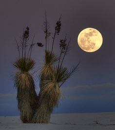 Full Moon at White Sands, New Mexico