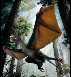The new dinosaur, named Yi qi (shown above in the artists reconstruction), had unusual bristle-like feathers and bat-like wings that were covered in a membrane. The dinosaur may have been able to glide and even flap Dinosaur With Wings, Tiny Dinosaur, Dinosaur Fossils, The Good Dinosaur, Dinosaur Art, Reptiles, Mammals, Flying Squirrel, Prehistoric Creatures