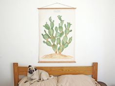 Cactus  Opuntia Jamaicensis  wall Poster print  plants by ARMINHO