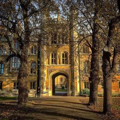 From our friends at Cambridge  @cambridgeuniversity - Trinity College this afternoon on a very chilly day in Cambridge.  Photo by @mister_toodles  #cambridge #cambridgeuniversity #cambridgeuni #university of cambridge #university #study #student #students #autumn #trinitycollege #trinitycollegecambridge #porter #tree  2 November 2016 #goviewyou