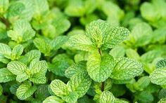 The 8 best herbs to grow for a beginner's herb garden - David Domoney