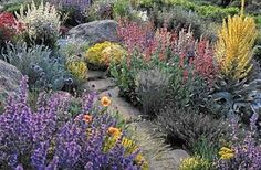xeriscape with color, major points of xeriscape