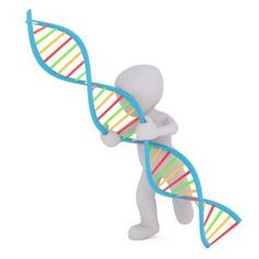 Genealogy and DNA testing has become intertwined. Here are some things to know about DNA. National DNA Day was April 25. Genealogy and genetics have become intertwined over the years. Today, genealogists are as likely to use online genealogy resources as they are to order a DNA test in an effort to learn more about their family tree. #DNA #DNAday17 #genes #genealogy #familytree #ancestors #history #MedicalFamilyTree