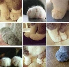 "themanfromnantucket: "" safelov: "" mood board "" This has come up on my dash at least 3 times and every time I think ""why no polydactyl cats?"" For fans of toe beans who are unaware, polydactyly is the increased amount of paw per cat. It's a fairly. Cute Kittens, Cats And Kittens, Crazy Cat Lady, Crazy Cats, Animals And Pets, Cute Animals, Cat Paws, Beautiful Cats, I Love Cats"