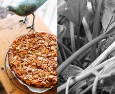 Rhubarb, Quince + Almond Cake, recipe....