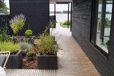 Aarhus, Siena, Plants, Patio, Plant, Planets