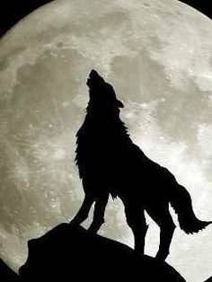 Wolf Artwork, Timber Wolf, Wolf Wallpaper, Wolf Howling, Moose Art, Cute Animals, Creatures, Illustration, Dogs