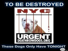 """Please sign and share this petition to  """"Investigate NYC Animal Shelters, in Violation of Humane Laws and the Public Trust"""". NYC is literally getting away with murder.  http://www.gopetition.com/petitions/new-york-city-animal-shelters-are-in-violation-of-humane-laws-and-conducting-a-veiled-conspiracy-of-murder-we-demand-an-investigation/sign.html"""