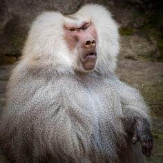 ew something smells like doodoo baboon