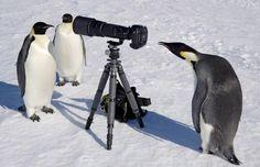 ペンギン「なんか撮影してるンゴwwwwww」 | 2ちゃんねるスレッドまとめブログ - アルファルファモザイク