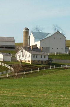 White Barns - reminds me of green cove dairy barns
