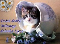 Kartka pod tytułem Milusiego dzionka życzę! Weekend Humor, Crazy Day, Cute Gif, Emoji, Good Morning, Cute Pictures, Memes, Cats, Animals