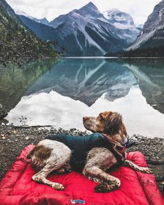The Loft Wander Bed is a dog travel bed that can be used for pet travel, camping, or hiking. It's a waterproof dog bed so it's perfect for camping or hiking. Cute Dogs And Puppies, Big Dogs, Weekend Camping Trip, Hiking Dogs, Companion Dog, Pet Travel, Training Your Dog, Dog Owners, Dog Bed