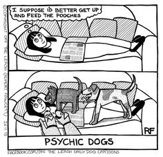 boy is this TRUE ! Dogs are psychic, and they can tell time. LOL