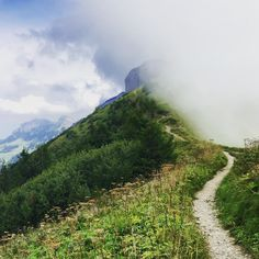 All the way up #appenzell #bollenwees #swiss #switzerland #schweiz #suisse #svizzera  M Y  H A S H T A G :: #pdeleonardis C O P Y R I G H T :: @pdeleonardis C A M E R A :: iPhone6  #inlovewithswitzerland #switzerlandpictures #feelthealps #ig_switzerland #hiking4fun #visitswitzerland #ig_europe #wu_switzerland #igerswiss #swiss_lifestyle #aboutswiss #sbbcffffs #ig_swiss #bealpine #amazingswitzerland #loves_switzerland #switzerland_vacations #swissalps #hiking #pictureoftheday #blickheimat…