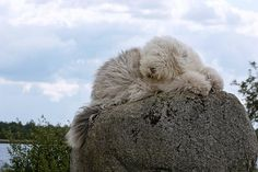 I can sleep anywhere :) by dewollewei, via Flickr