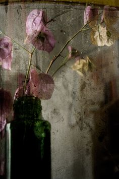 Katia Chausheva - Photography - Flowers