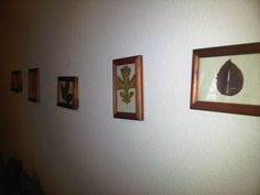 Fall Decor - $0.00  Leaves from my dog walk, frames from my collection