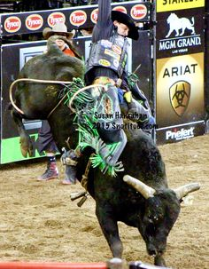 ELECTRIC PRUNE with J. B. Mauney on board Cowboy Horse, Cowboy Art, Cowboy And Cowgirl, Rodeo Cowboys, Hot Cowboys, Las Vegas, Cow Cat, Rodeo Events, Professional Bull Riders