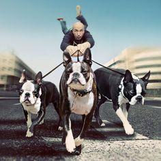 Walkin' The Dogs by Shawn Van Daele